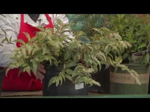 Carol's Favorite Woody Plants