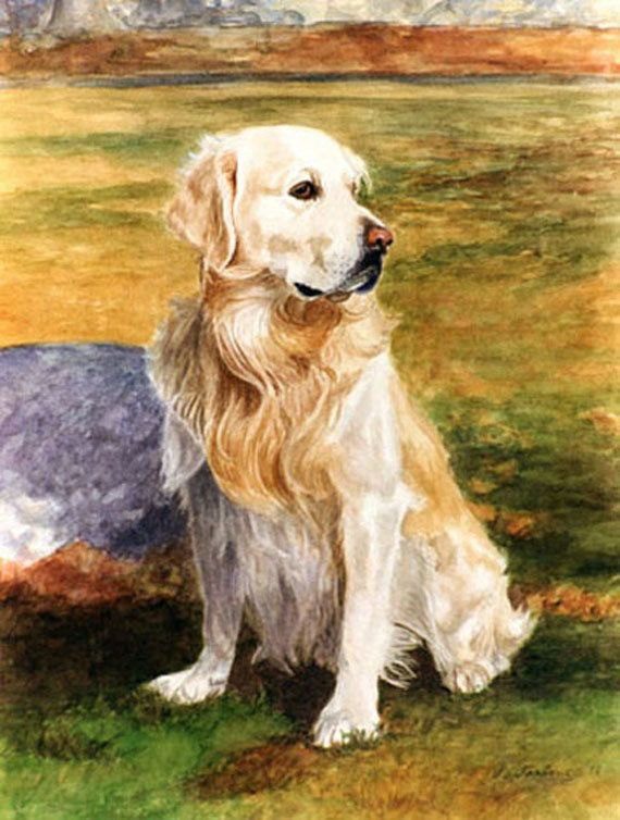 Seated Golden Retriever Dog Print from Watercolor by by PTarlowArt, $20.00