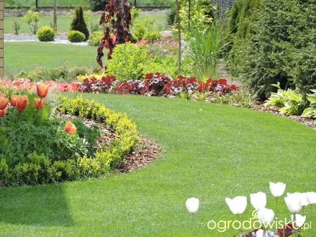 Zielonej ogrodniczki marzenie o zielonym ogrodzie - strona 689 - Forum ogrodnicze - Ogrodowisko