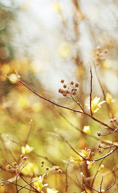 Autumn came softly ...
