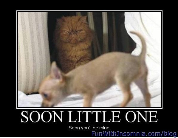 Soon Little One Kitten Funny & also true nature of Many (not all) cats!!!