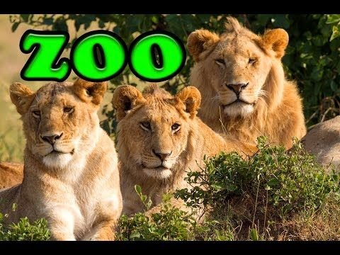 Zoo Land Disney Outdoor Play Centre for Kids with Funny Toyo Surprise - YouTube