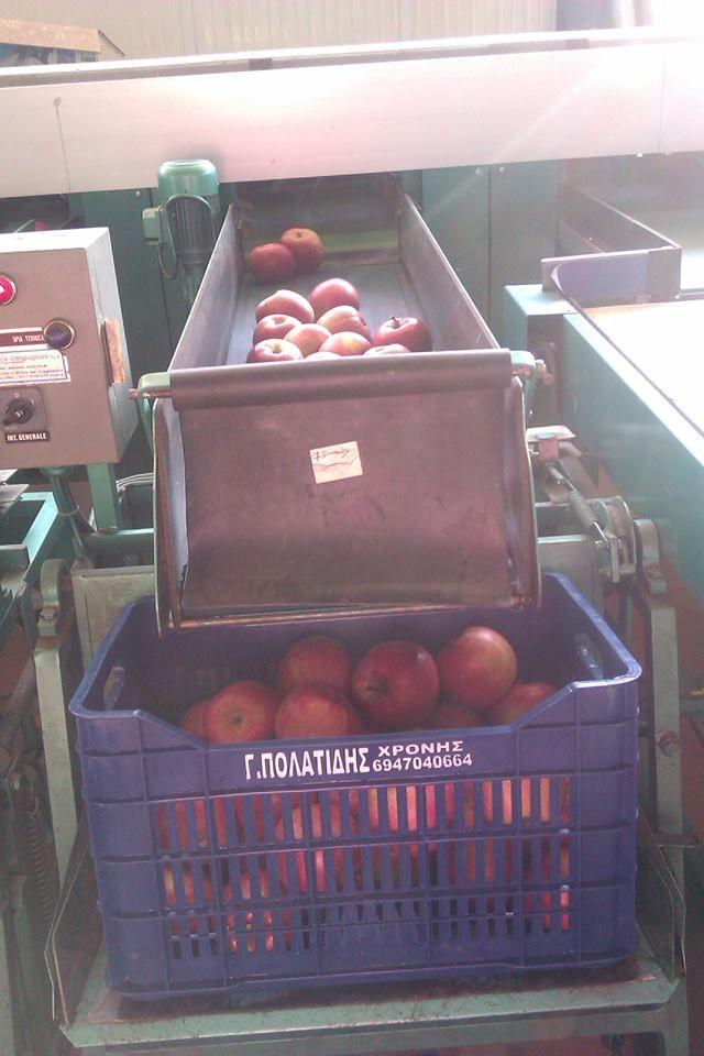 Η διαλογή των μήλων γίνεται σε όλα τα μεγέθη ανάλογα με τις προτιμήσεις του πελάτη. Realfruit ΧΡΟΝΗΣ Κεντρικά γραφεία Φιλίππου 10, Έδεσσα Τ.Κ.: 58200 Τηλ: 23810- 23237 Φαξ: 23810- 23159 email: sales@realfruit.gr website: www.realfruit.gr
