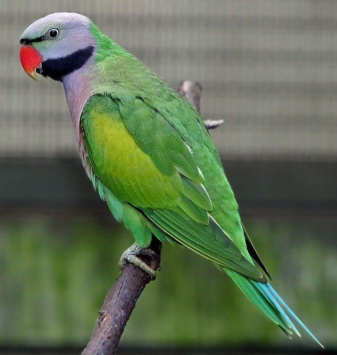 Choosing The Best Pet Birds Top 20 Pet Birds Reviewed For The