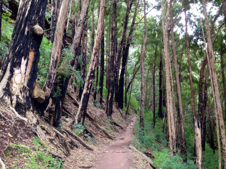 Contour path, Table Mountain, Newlands Forest, CAPE TOWN, South Africa