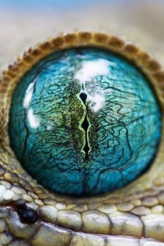 Cool reptile eye #ravenectar #microscope #upclose #beautiful #patterns #intricate #micro