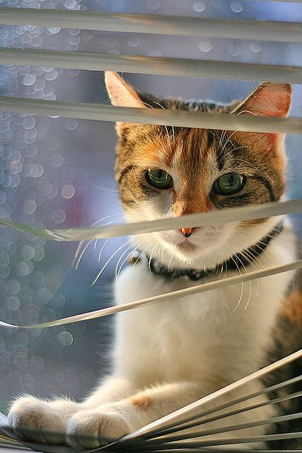 17 Best Images About Cats N Mini Blinds On Pinterest