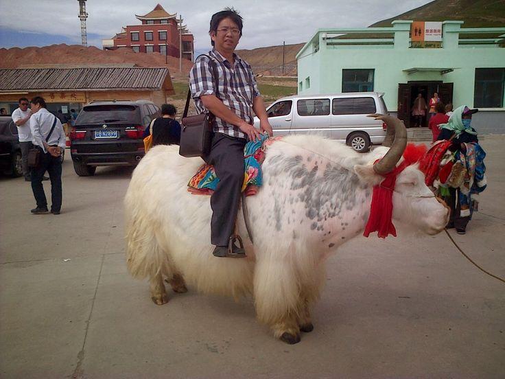 Kunjungi Peternakan, Komunitas Muslim dan Berburu Kuliner Khas Qinghai ~ S1 CULBIZ - Tristar Institute