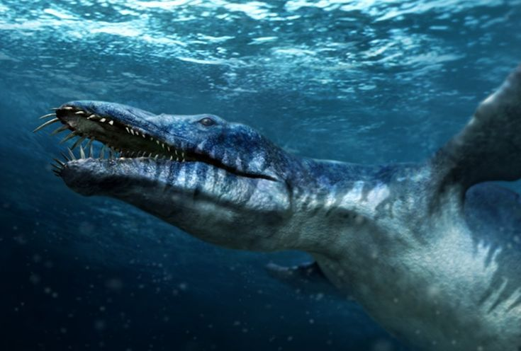 How Much Do You Know About Liopleurodon?: Like Whales, Liopleurodon Had to Surface to Breathe Air