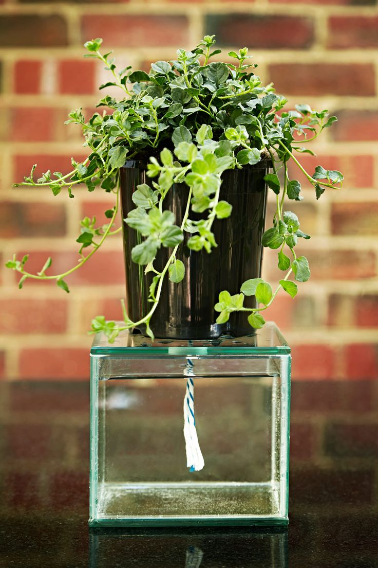 Automatic watering system for potted plants - At Keystone Gardens In Australia You Can Get The Self Watering Pot To Grow Plants