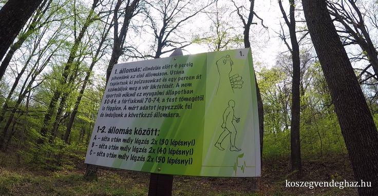 Erdei tornapálya Kőszeg #kőszeg #erdő #edzés