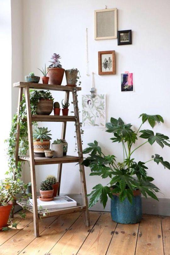 Die besten 25+ Plant ladder Ideen auf Pinterest Leiterregale - grose wohnzimmer pflanzen