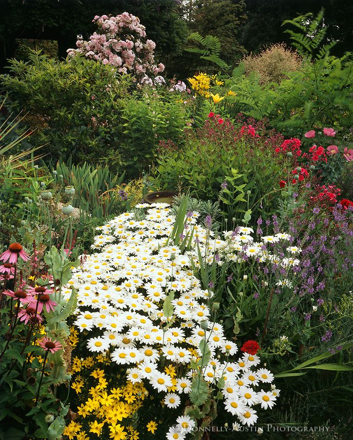 101 best Planting Design Drifts Massing images on Pinterest