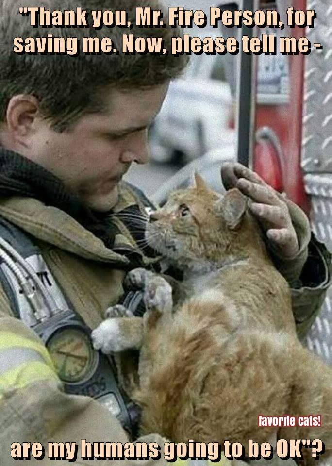 My mom made me promise to just leave my cats if there is a fire. I told her I would, but there's no f'n way. They're part of the family. I couldn't leave them. As this picture shows, firefighters risk their own lives to save our animals. If you've never lost a beloved pet, you never realize how hard it hits.