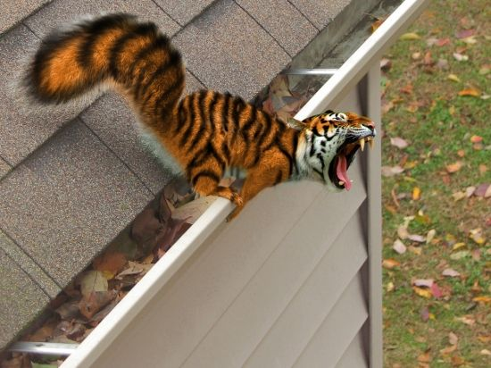 Ultra Rare Tiger Squirrel - jebus!
