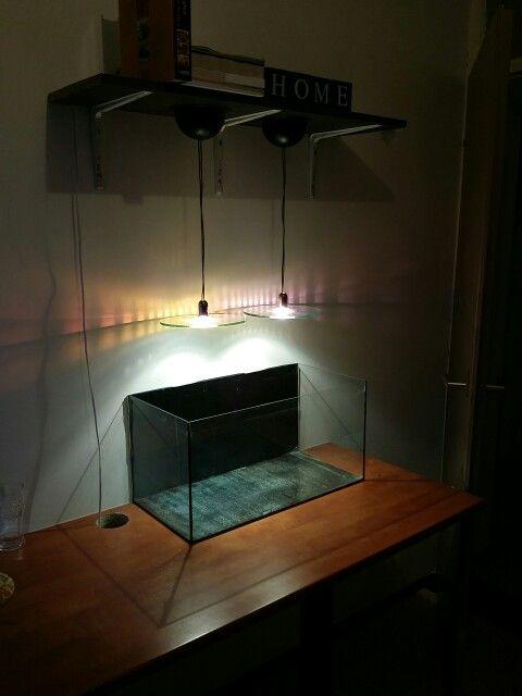25 best ideas about cheap aquariums on pinterest cheap for Discount fish tanks