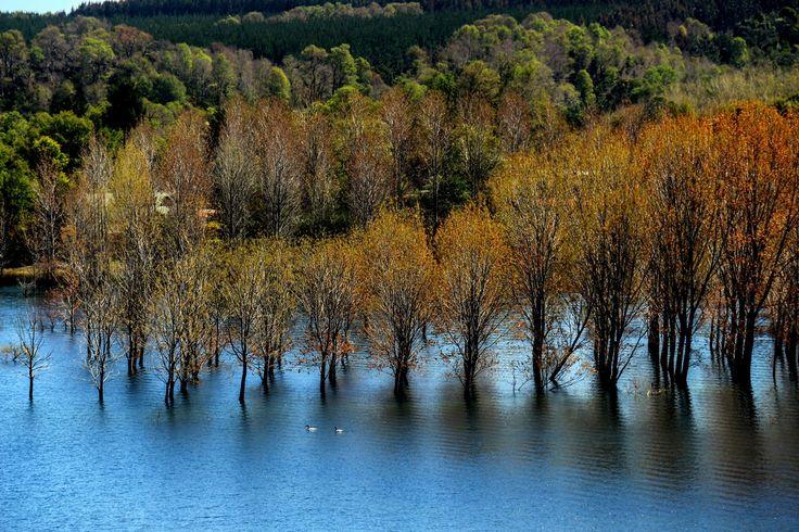 Lago Lanalhue. Foto de Mario Quiroga C.