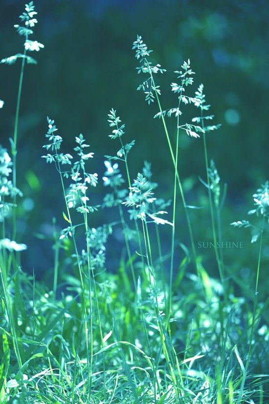 Teal photo - teal green home decor 8x12 or Any size up to 20x30 Digital…