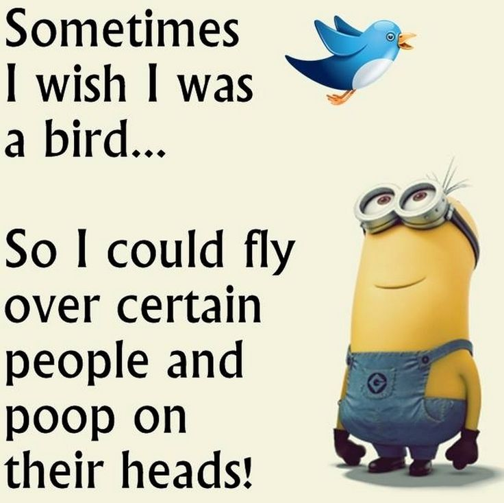 Funny December Quotes: Best 25+ Minions Funny Hilarious Ideas On Pinterest