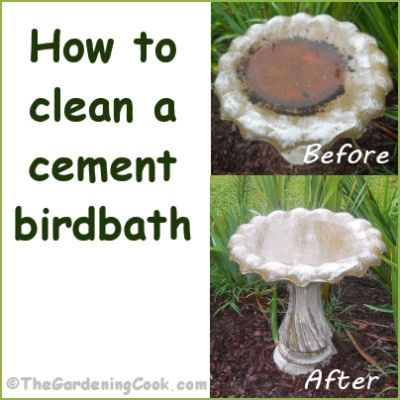 How to clean a cement bird bath cement cleanses and for How do i clean concrete