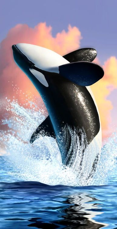 Orca - magnificent!!!