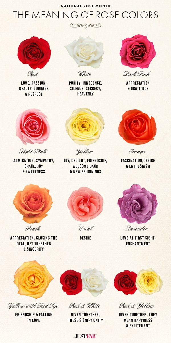 DIY a thoughtful bouquet of roses! Learn the meaning of your favorite rose colors with this infographic. #flowers