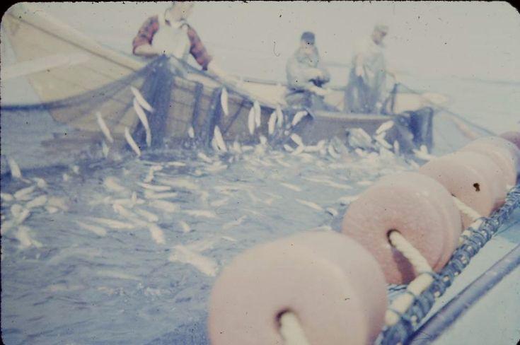 Fishing Shelburne, NS