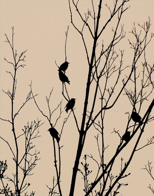 black birds in a tree print | Birds and tree. Silhouette ...