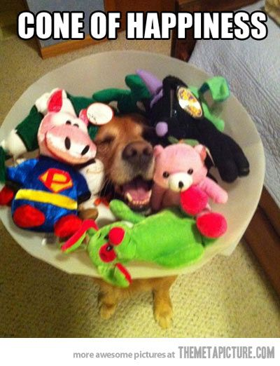 The cone of happiness. Too adorable!