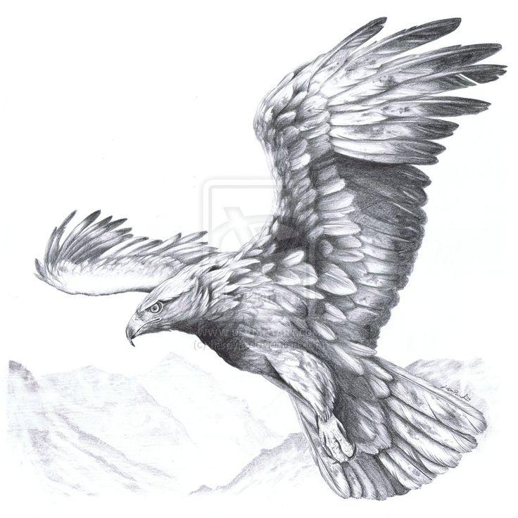 eagle anatomy - Szukaj w Google                                                                                                                                                                                 More