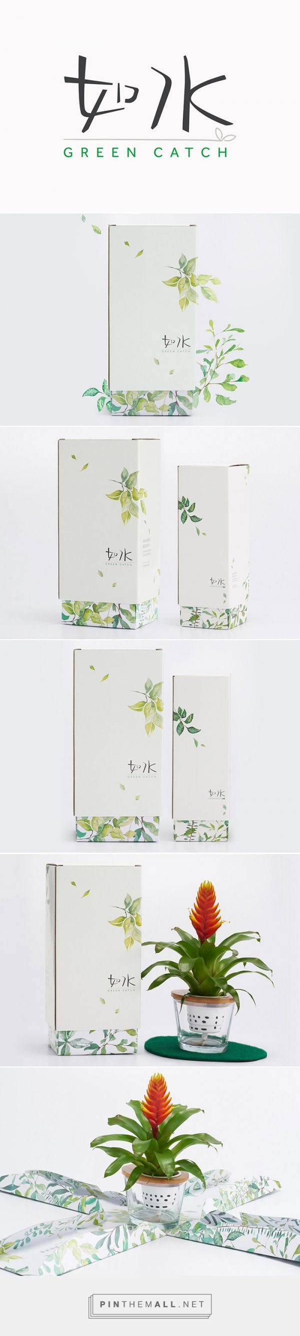 Green Catch plant packaging branding project by Box Brand Design Co. Source…