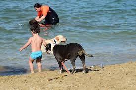 A Silvi la pet therapy scende in spiaggia: accordo del Comune con Unica Beach :http://www.qualazampa.news/2016/07/13/a-silvi-la-pet-therapy-scende-in-spiaggia-accordo-del-comune-con-unica-beach/