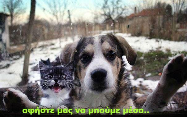 Pet Sitting: Λόγια ενός σκύλου που κρυώνει αυτόν τον ψυχρό χειμ...