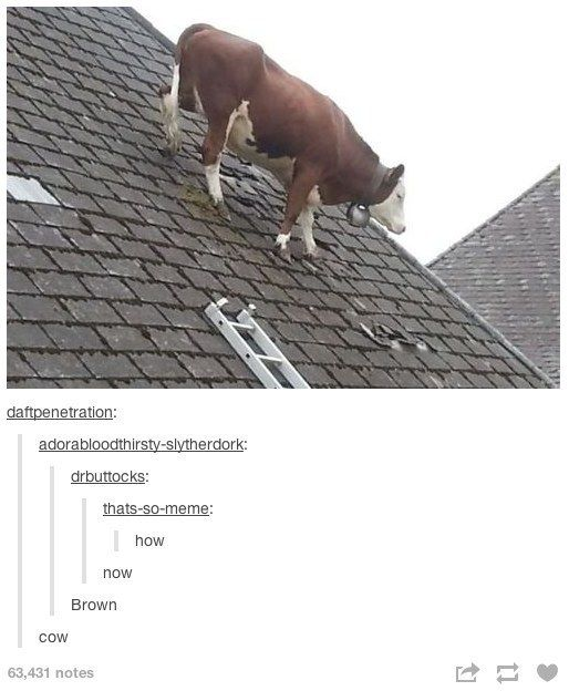 Cow rhymes: | 28 Of The Most Important Things That Ever Happened On Tumblr