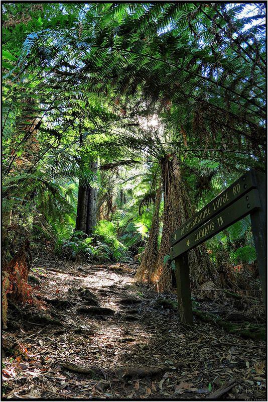 sherbrooke forest Australia