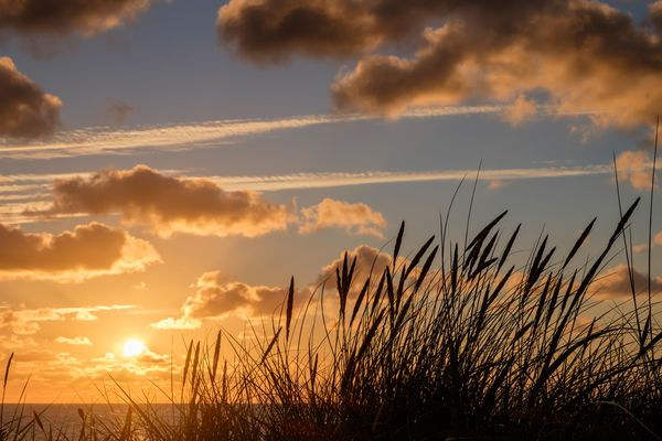 Sylt - Strandhafer in Abendsonne