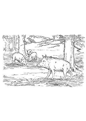 ausmalbild schweine im wald zum kostenlosen ausdrucken und