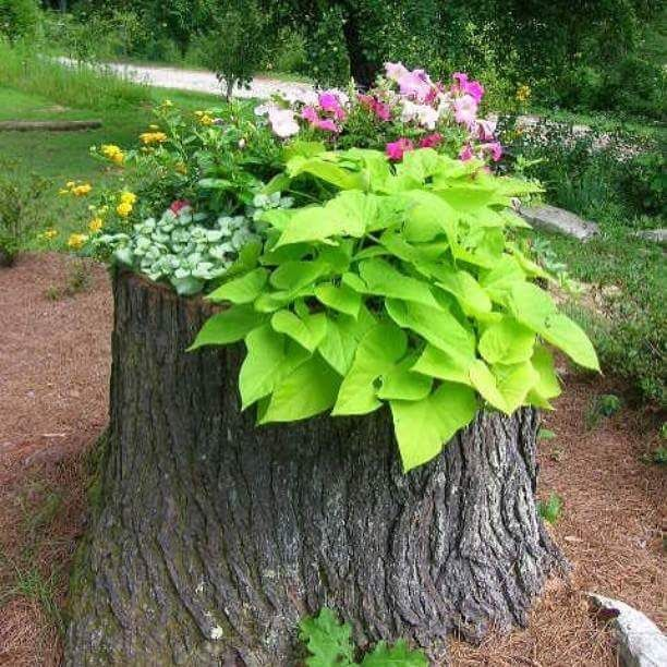 If you HAVE to cut down a tree, why not make something beautiful with the stump? Love this!!