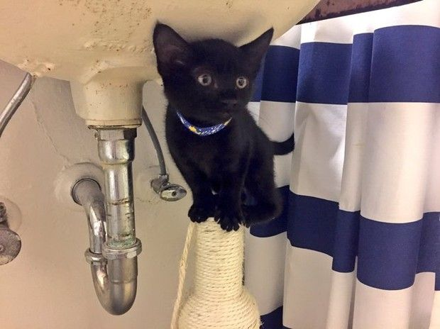 20 of the best Portland cats on Instagram http://trib.al/7jklu7p