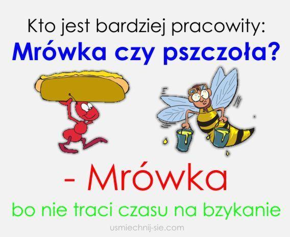 #humor #smieszne #pszczola #mrowka