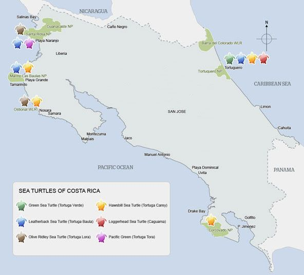 Ecco dove depositano le uova le tartarughe marine in Costa Rica!