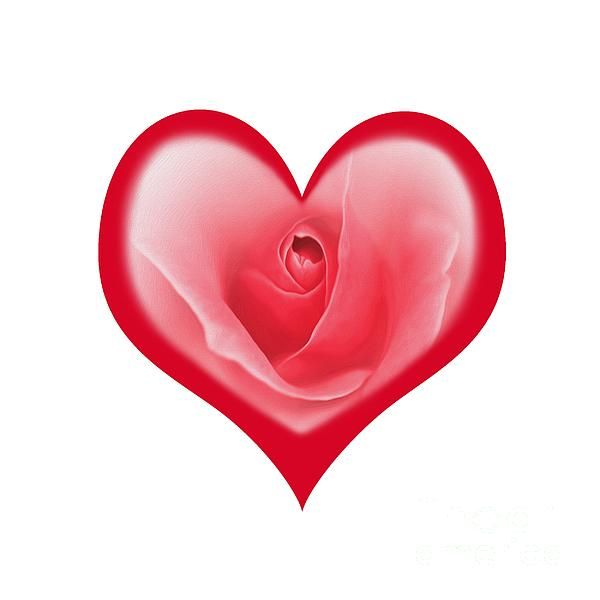 #ROSE #HEART #T-#SHIRT AND #PRINT by #Kaye #Menner #Photography Quality Prints Cards and more at:  http://kaye-menner.artistwebsites.com/featured/rose-heart-t-shirt-and-print-by-kaye-menner-kaye-menner.html