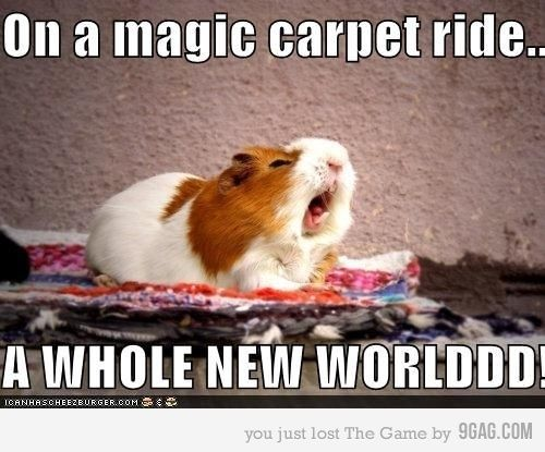 : Funny Animal Pictures, Funny Pictures, Points Of View, Hamsters, Magic Carpets, Disney, So Funny, Aladdin, Guinea Pigs