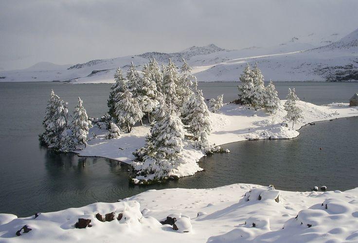 Laguna del Maule, Chile. Bosque de pinos en invierno.