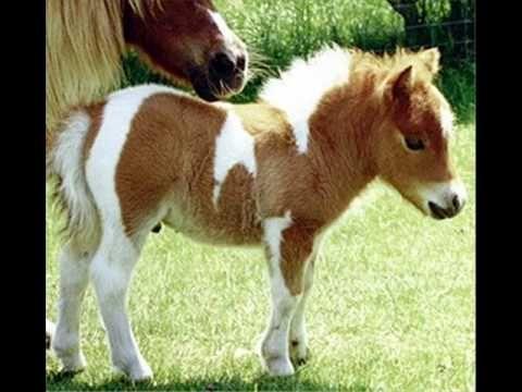 ▶ Petit poney