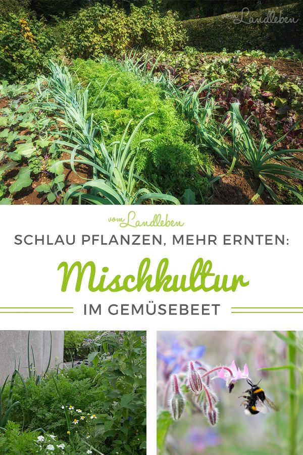 104 best Garten images on Pinterest Gardening, Landscaping and - unkraut im rasen