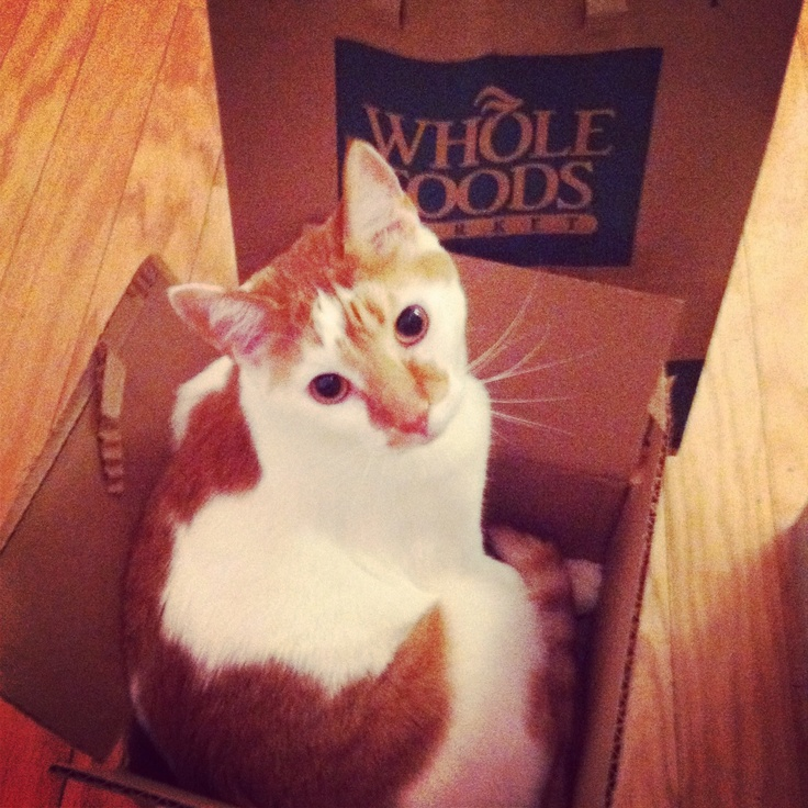 little box, big kitty