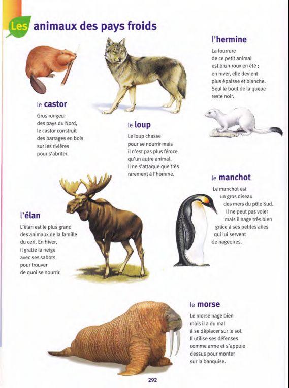 animaux des pays froids 1 / Larousse des Maternelles