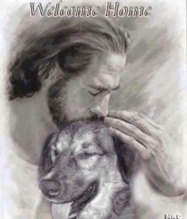 Welcome home... Pic of dog with Jesus