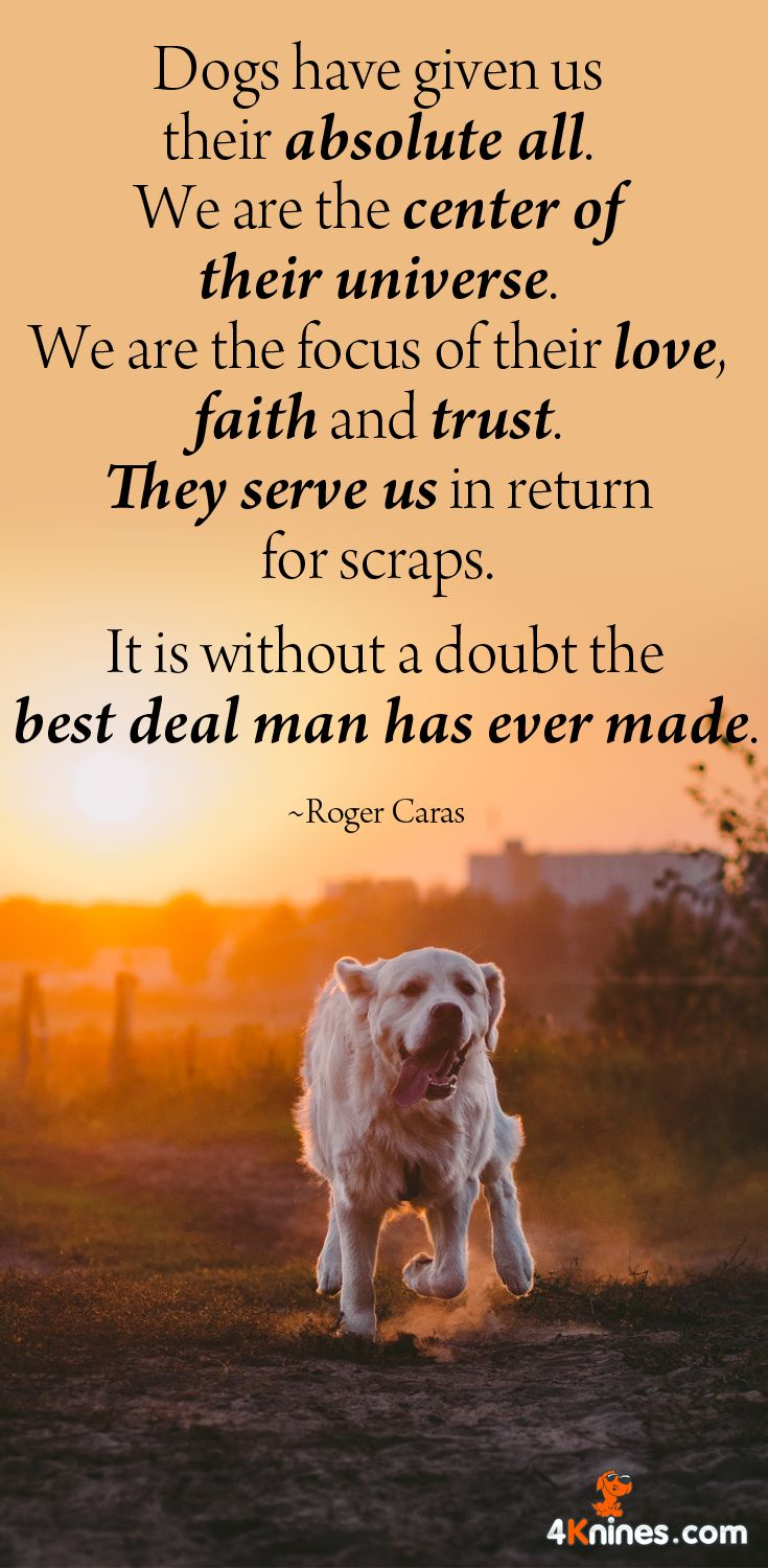 Quotes About Dog Friendship 757 Best Inspirational Dog Quotes Images On Pinterest  Animal
